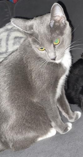 Lost Unknown Cat last seen Wilcox & Stern, Crest Hill, IL 60403