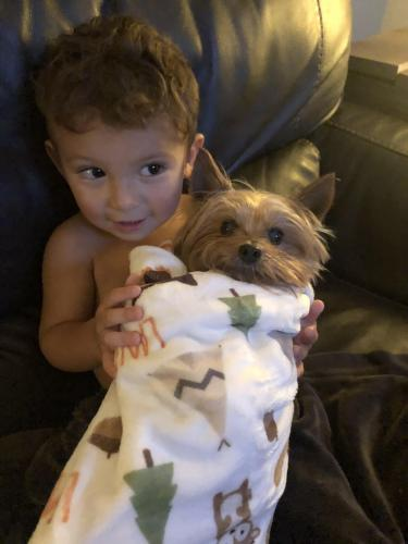 Lost Male Dog last seen Routt St & Handley St, Fort Worth, TX 76112