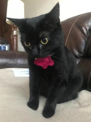 Lost Female Cat last seen Near and Sugar Pine, Houston, TX 77090