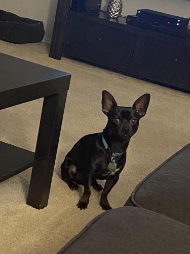 Lost Male Dog last seen Green Oaks and Petra, Arlington, TX 76017