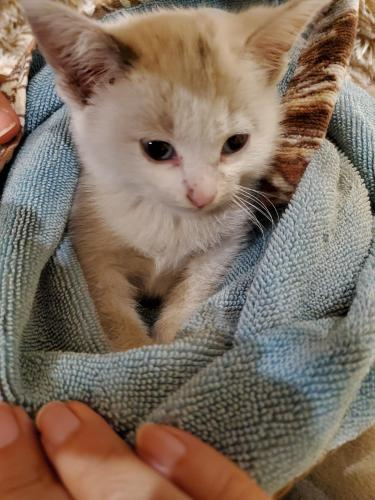 Found/Stray Unknown Cat last seen Near N Belt Line Rd, Irving, TX 75038, Irving, TX 75038