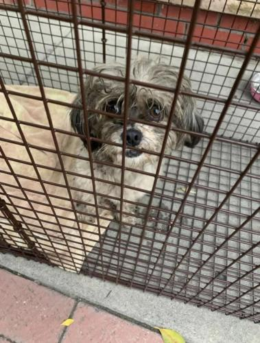 Found/Stray Male Dog last seen Southern Avenue, South Gate CA, South Gate, CA 90280