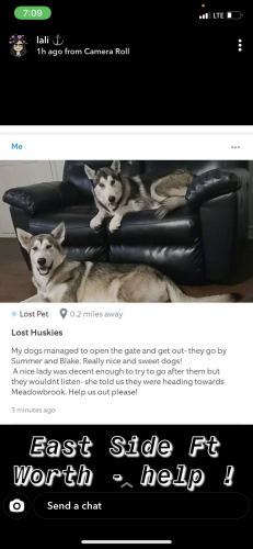 Lost Male Dog last seen Near Yeager st , Fort Worth, TX 76112