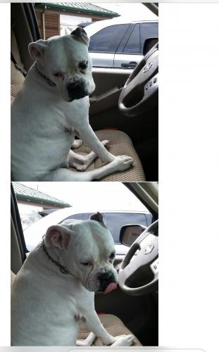 Lost Female Dog last seen Gas station near there , Fort Worth, TX 76132