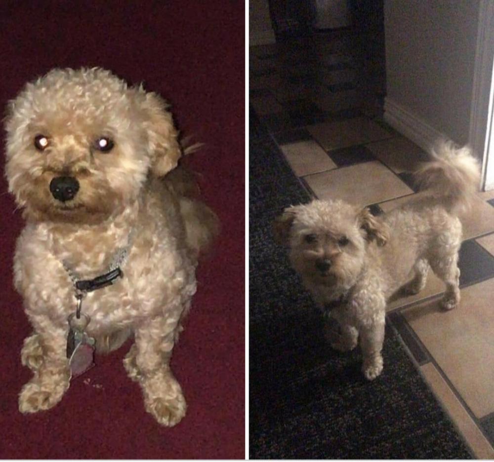 Reunited Male Dog last seen Lovers ln and daniel dr 76010, Arlington, TX 76010