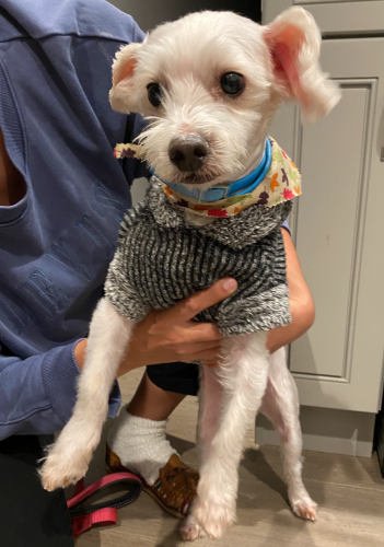 Found/Stray Male Dog last seen Soto & Houston Street in Boyle Heights, Los Angeles, CA 90033