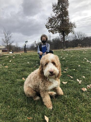 Lost Unknown Dog last seen Ashbury subdivision - near Book Rd, Naperville, IL 60564