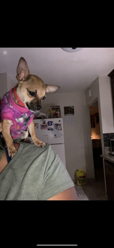 Lost Female Dog last seen Basye , cogswell, madera, El Monte, CA 91732