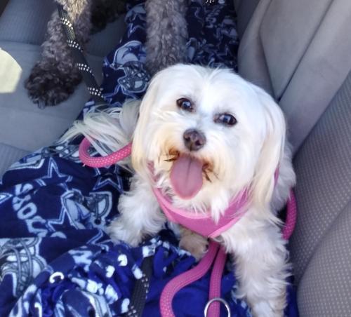 Lost Female Dog last seen Near Redondo Avenue 12 and 10th Street, Long Beach, CA 90804