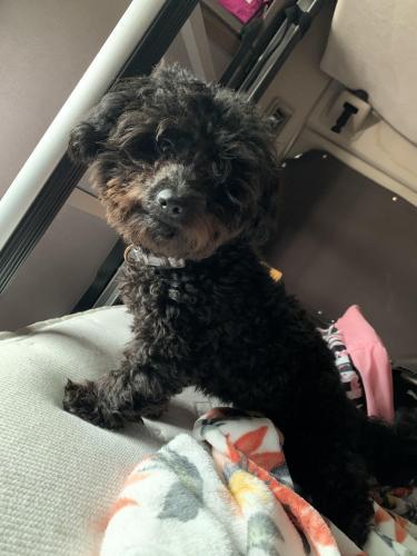 Lost Male Dog last seen Across from Aldi off of frankford , Dallas, TX 75287