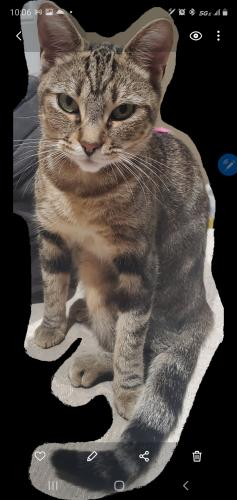 Lost Female Cat last seen Between ramona & Hawthorne blvd, Hawthorne, CA 90250