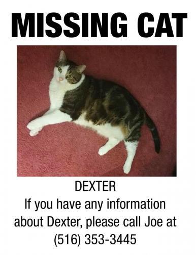 Lost Male Cat last seen Wildwood Lane, Greenvale, NY 11548