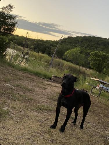 Lost Male Dog last seen Bicentennial , Southlake, TX 76092