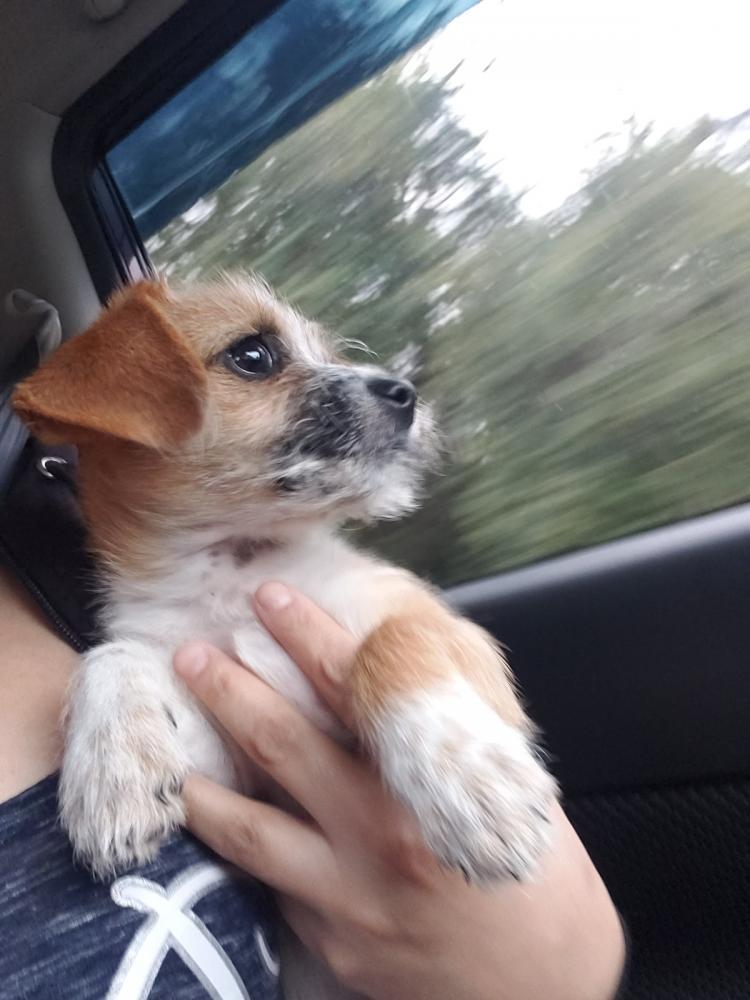 Reunited Male Dog last seen Road to six flags & Cooper st., Arlington, TX 76011