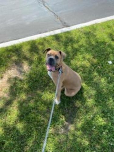 Lost Male Dog last seen Itz , quick trip , aldi's , Euless, TX 76040