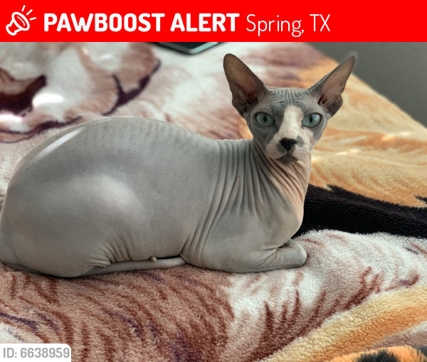 Lost Male Cat last seen Sherioaks Ln and Cabanna Rd. Near the baseball fields, Spring, TX 77389