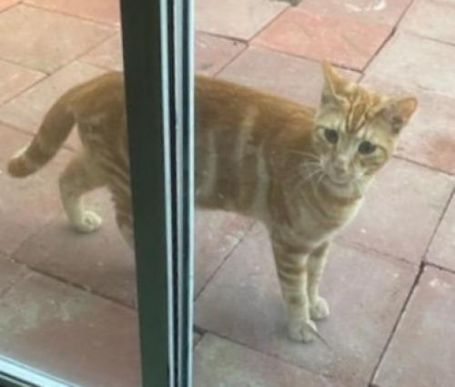 Lost Male Cat last seen Mulberry Dr & Gunn Ave, Whittier, CA 90605