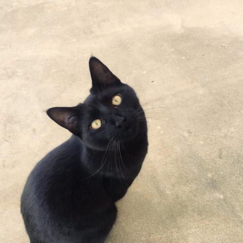 Lost Male Cat last seen Crystal canyon natural area , Arlington, TX 76011