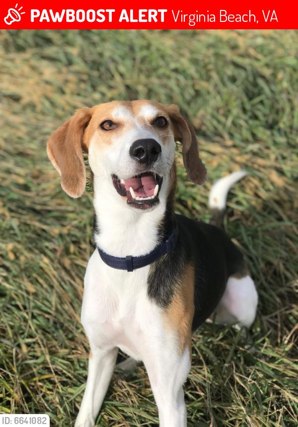 Lost Female Dog last seen Bolero Ct & Daniel Smith Rd, Virginia Beach, VA 23462