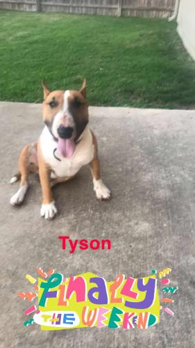 Lost Male Dog last seen Near trinity Bend Circle , Arlington, TX 76006
