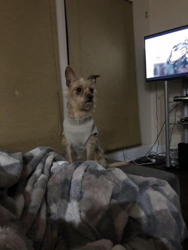 Lost Male Dog last seen Brandy Station and Lakeridge, Grand Prairie, TX 75052