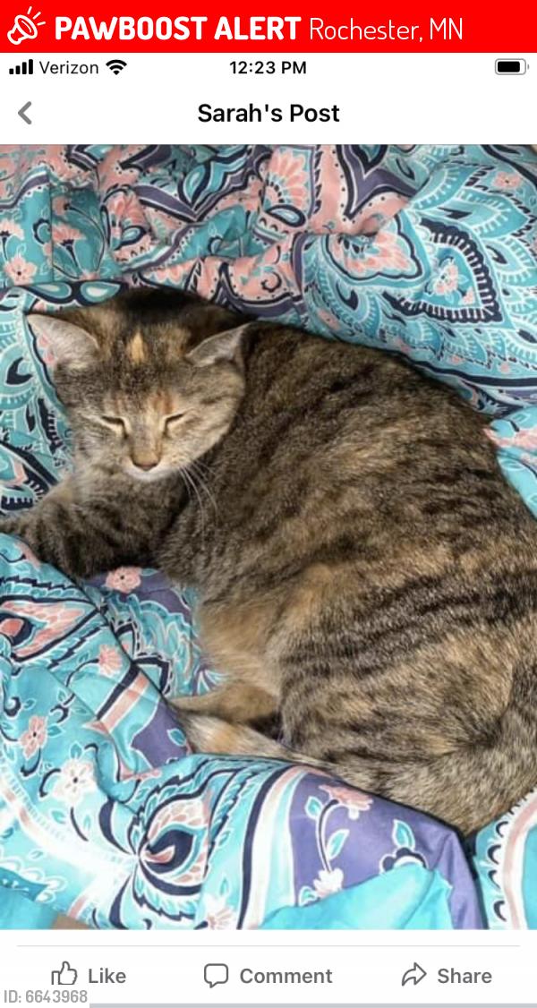 Lost Female Cat last seen Near Elm Ln SE, Rochester, MN, Rochester, MN 55904