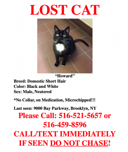 Lost Male Cat last seen Cesaers Shopping Center, Brooklyn, NY 11214