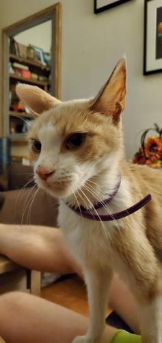 Lost Male Cat last seen Duvall Street, Los Angeles, CA, Los Angeles, CA 90031
