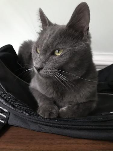 Lost Male Cat last seen Near chadds landing way, manassas, va 20111, Manassas, VA 20111