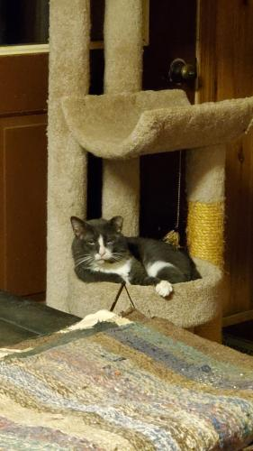 Lost Male Cat last seen Stoke Farm Ln and Champe Ford, Middleburg, VA 20117