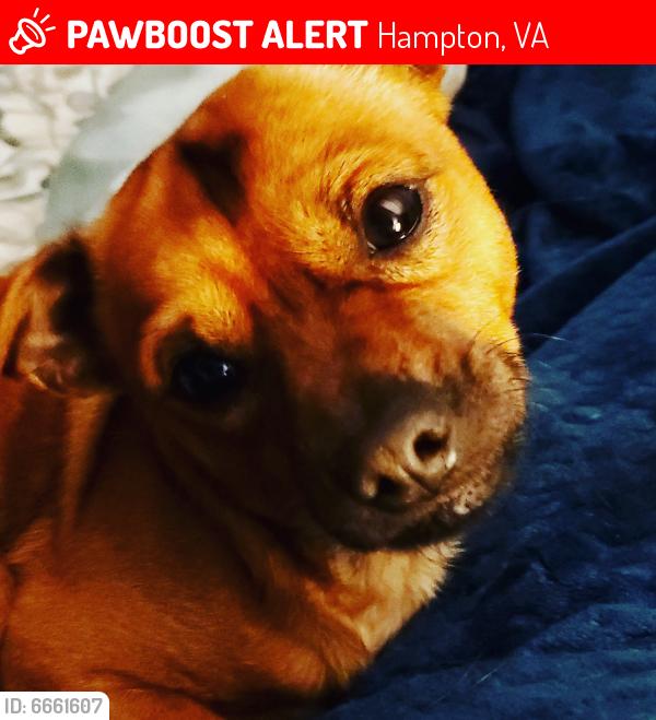 Lost Male Dog last seen Lasalle ave and West Pembroke , Hampton, VA 23669