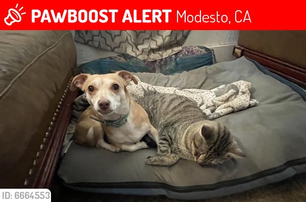 Lost Male Dog in Modesto, CA 95354 Named Benson (ID ...