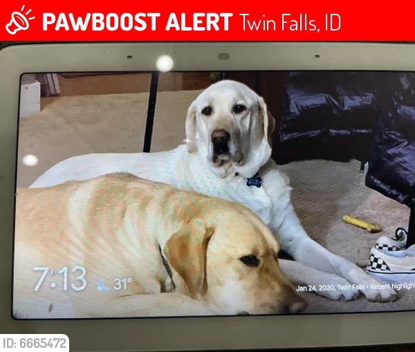 Lost Female Dog last seen Subway soccer complex, Twin Falls, ID 83301