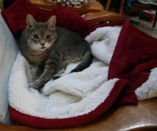 Lost Female Cat last seen Peachorchard , Newport News, VA 23602