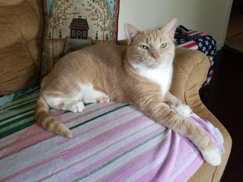 Lost Male Cat last seen Edsyl Street near Nicewood Park, Newport News, VA 23602