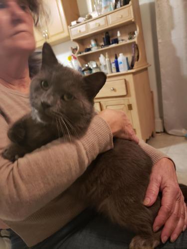 Found/Stray Unknown Cat last seen Glenrock road and va beach blvd, Norfolk, VA 23502