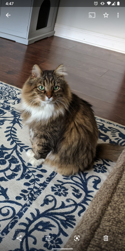 Lost Male Cat last seen Evans Rd and Silvergrove Drive in Cary NC, Cary, NC 27513