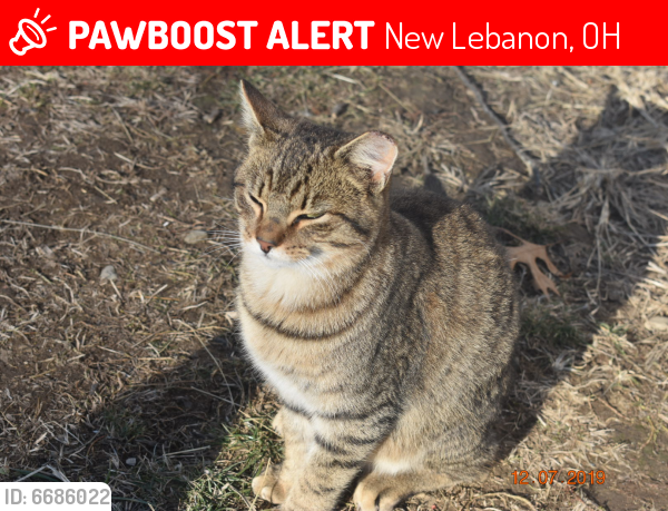 Lost Male Cat last seen Lutheran Church/Forney Rd, New Lebanon, OH 45345