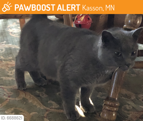 Found/Stray Male Cat last seen 270th Ave and 682nd St; Rural Kasson, Dodge County MN, Kasson, MN 55944