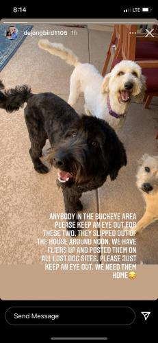 Lost Male Dog last seen Yuma and Rainbow, Buckeye, AZ 85326