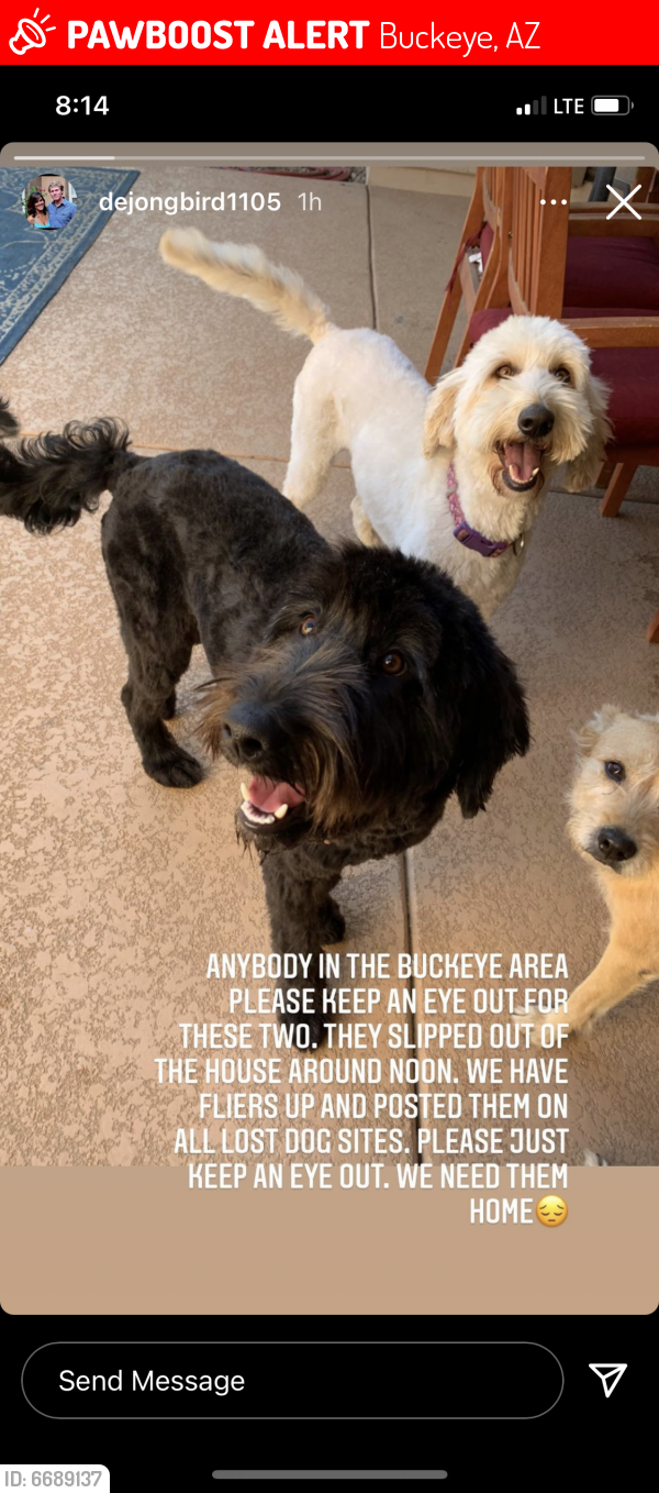 Lost Male Dog last seen Yuma and Rainbow, Buckeye, AZ 85326