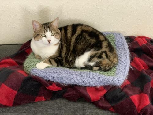 Lost Female Cat last seen Wadesworth Shores Neighborhood , Virginia Beach, VA 23451