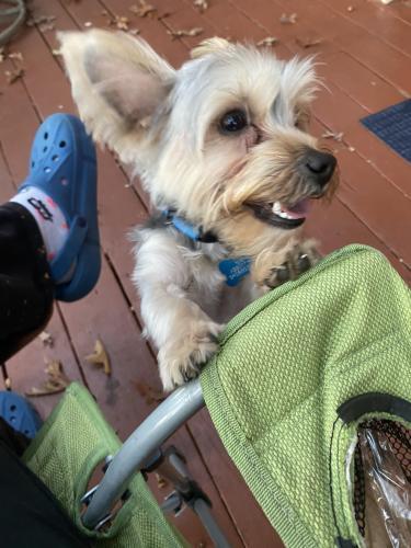 Lost Male Dog last seen Newtown road, lake Edwards , Virginia Beach, VA 23462