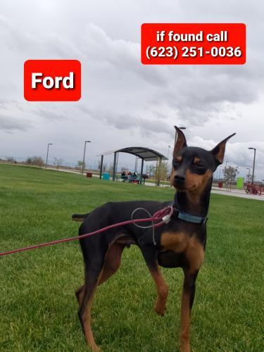 Lost Male Dog last seen Central and buckeye rd, Avondale, AZ 85323