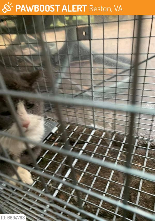 Found/Stray Unknown Cat last seen Newport Spring Court, Reston VA, Reston, VA 20194