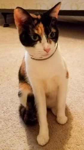 Found/Stray Unknown Cat last seen Aragona village, Virginia Beach, VA 23455
