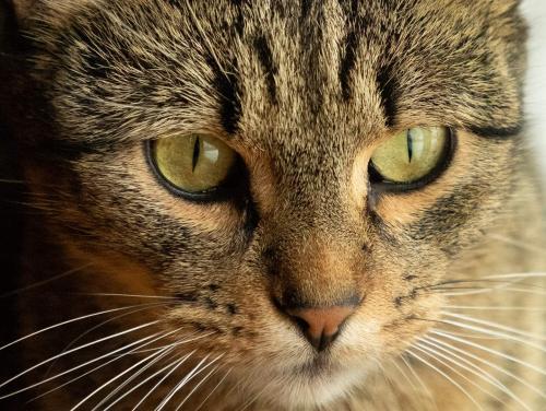 Lost Male Cat last seen East veterans memorial hwy, Kasson, MN 55944