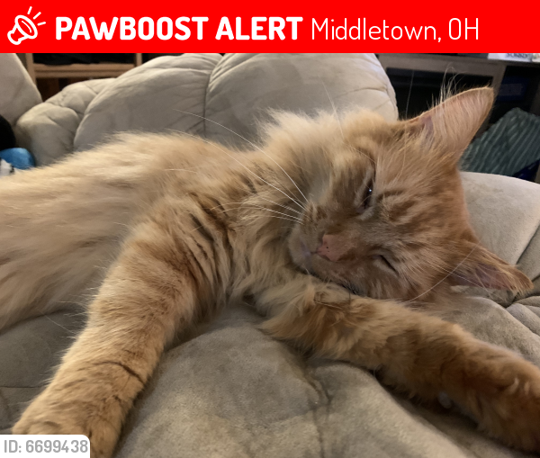 Lost Male Cat last seen Brell, Riverview, Spencer , Middletown, OH 45042