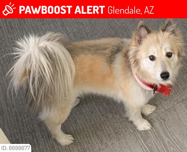 Lost Female Dog last seen 91st Northen , Glendale, AZ 85305