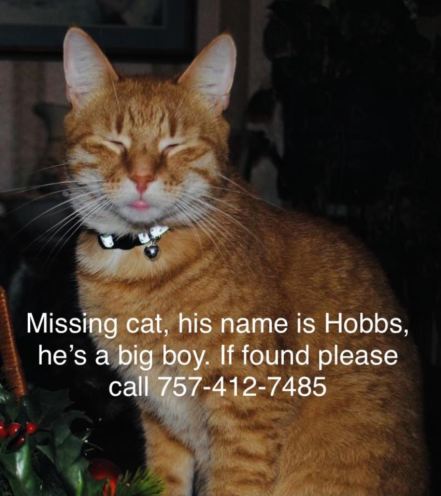 Lost Male Cat last seen Princess Anne Rd, Virginia Beach, VA 23462